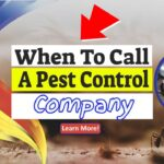 """Image text: """"When to call a pest control company""""."""